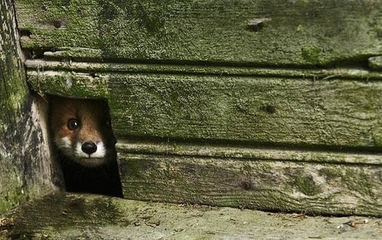 Abandoned Homes In The Woods Overrun by Wild Animals
