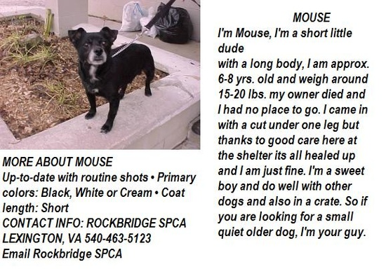 VIRGINIA ~ URG'T ~ meet Mouse ~ an #adoptable #Dachshund #Terrier blend in Lexington. I'm a short little dude with a long body approx 6-8y/o & about 15-20bs. My owner died & now Im at the shelter & need a 2nd chance in a loving fur-ever home ? Im H-trained & mellow ~ C'mon & #adopt me ! I'm at The ROCKBRIDGE SPCA & you can call them at ph 540-463-5123 --pin 1.8.13