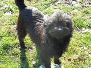 Betsy is an adoptable Affenpinscher Dog in Leslie, AR. Betsy is by far the CUTEST little bitty dog I have EVER met, hands down! Her pictures just do not do her justice! She is only about 5-6 lbs and j...