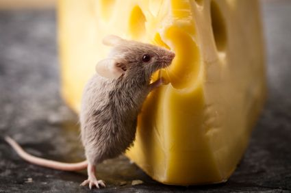 Know Thy Enemy: Mice (via @BrightNest)