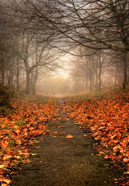 a lovely path of autumn leaves
