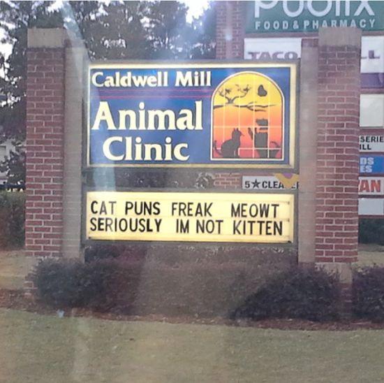 """Cat puns freak meowt, Seriously I'm not kitten."""