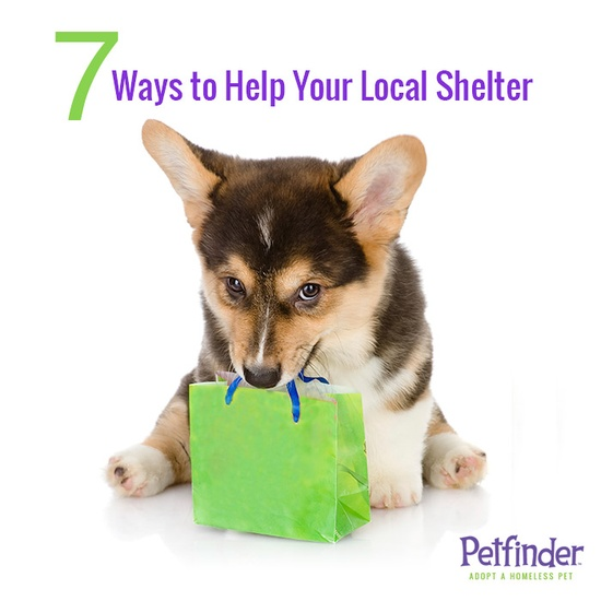 Want to help but don't have a lot of cash? Click through to find our 7 favorite ways to help! Repin to encourage others to give to their shelters.