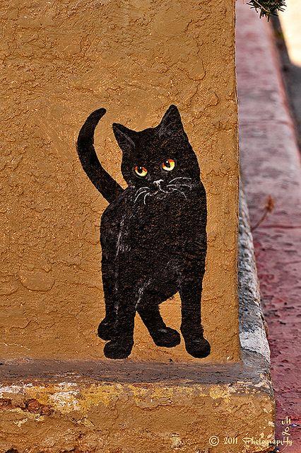 Miami Street Cat