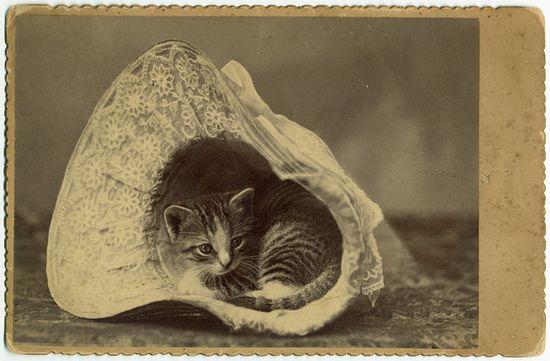 kitten in a bonnet, circa 1885