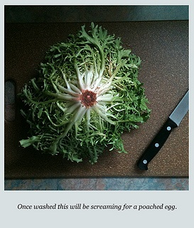 . food photography