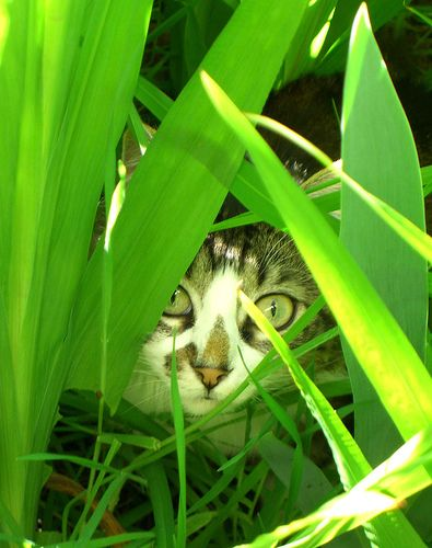 """I'm hiding...your not suppose to see me!!"""