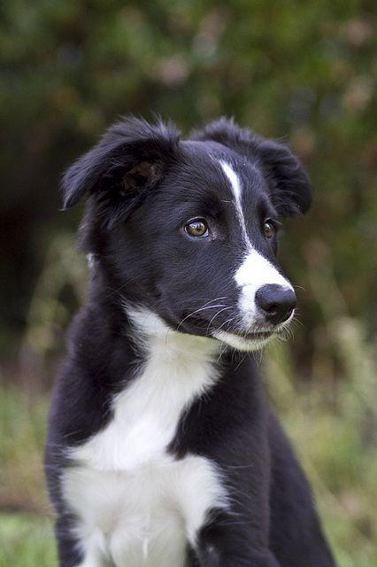 LOVE this dog!!