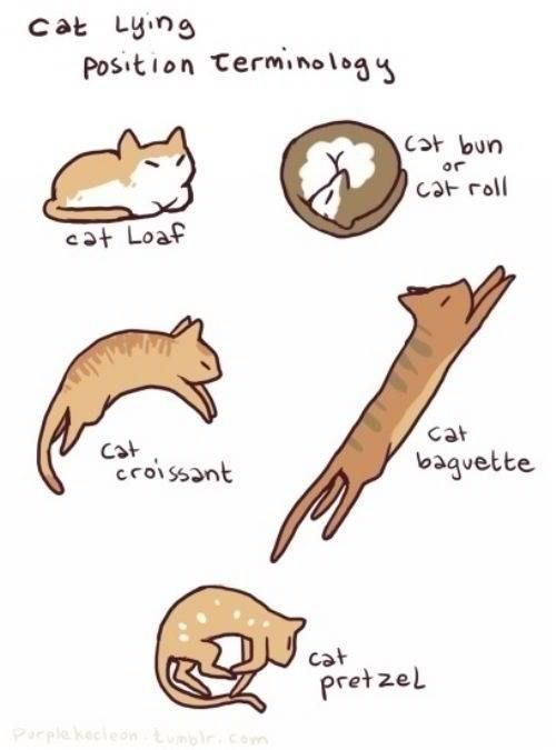 Cat Lying Position Terminology #Cats. We usually call the loaf the croissant lol