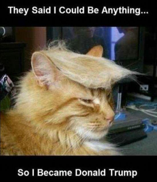 Donald Trump - Funny Cat