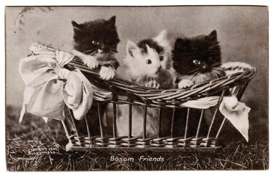 "Vintage Cats Postcard 1906 KITTENS Antique RPPC Real Photo By Bullard ""Bosom Friends"" CY 1902 Three Sweet Kittens In A Basket M. T. Sheahan"