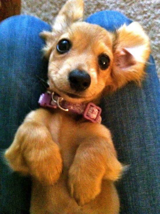 oh hey, cutie.