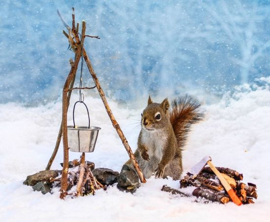 This is fantastic! Photographer Nancy Rose builds tiny sets in her back yard for squirrels to interact with.
