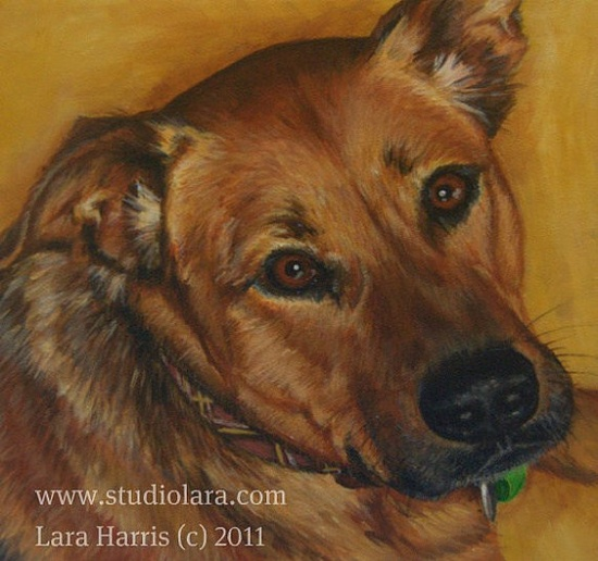 our Taffy ? pet portrait in OIL