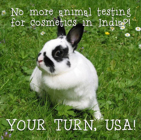LANDMARK VICTORY! After an intense campaign by PETA India, India is ENDING all cosmetic tests on animals. A huge step forward for millions of animals suffering in labs! www.petaindia.com...