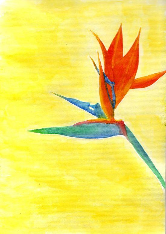Bird of Paradise watercolour