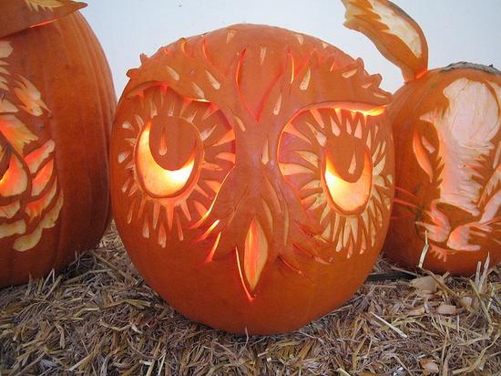 Owl Pumpkin Halloween #owl #halloween #stencil #pumpkin #fall