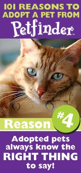 Find an adoptable pet in your area with Petfinder.com