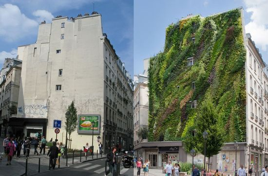 "(before and after) of ""L'Oasis D'Aboukir"" is a project completed by Patrick Blanc and located in Paris, France. The vertical garden decorates the façade of a historic building in the heart of the city, and features 7,600 plants from 237 different species.  AMAZING!"