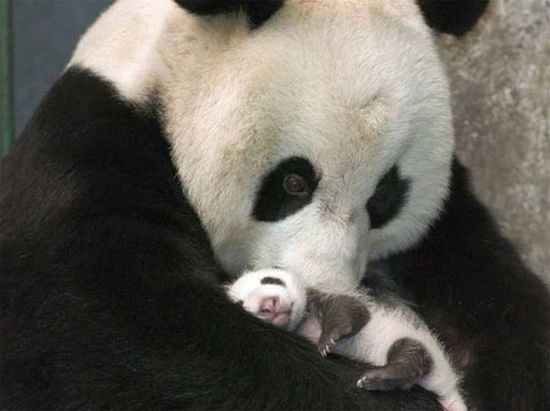 Animals and their babies! :~)