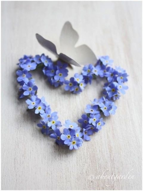forget me not heart
