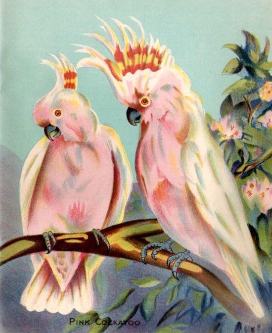 Pink Cockatoo Australian Bird vintage by VintageAndNostalgia