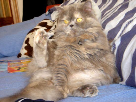 Funny Cat Photos - silly kitty