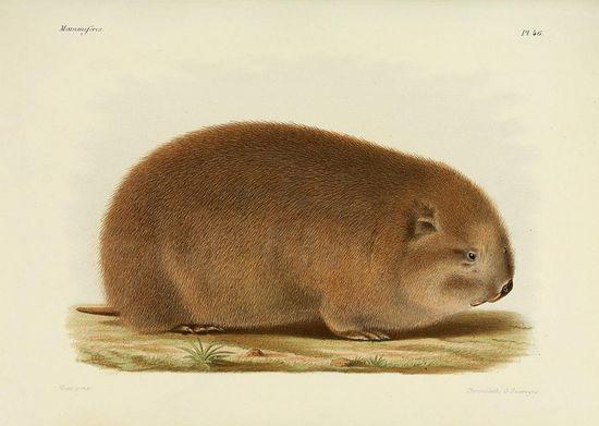 Natural history of mammals