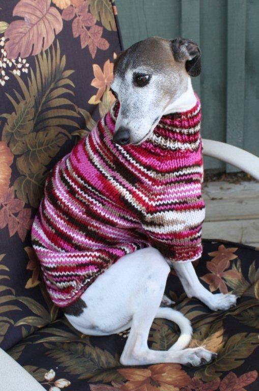 Italian Greyhound Dog Sweater by K9SweatersByMary on Etsy, $50.00