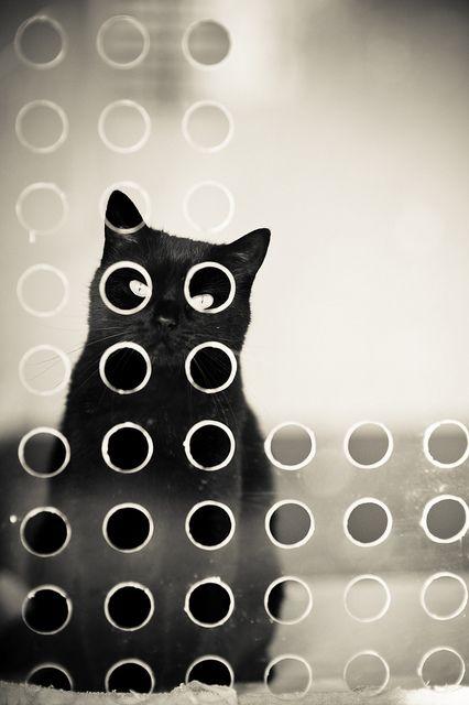 Cat says I see u!