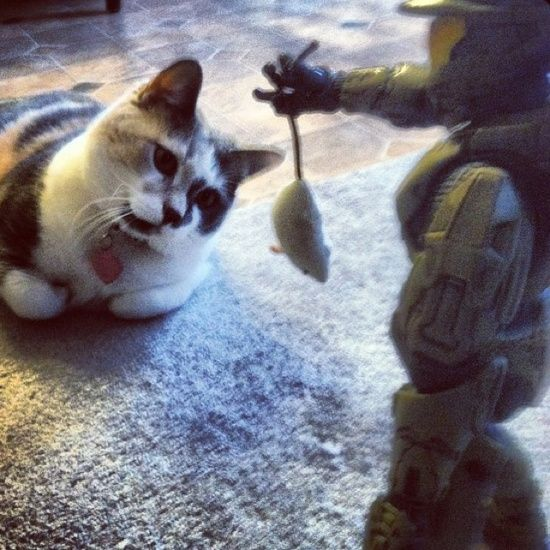 Master Chief .... From HALO ..... Brings Stella .... Her Mouse :) cat cats halo xbox360 kitty funny cute video