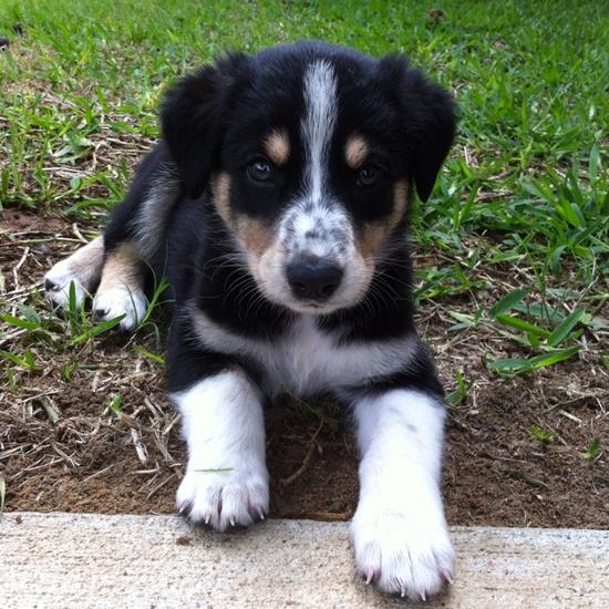 Adopting a pet saves a life!