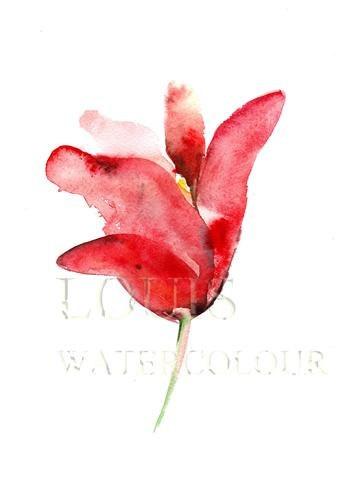 Beautiful watercolor tulip