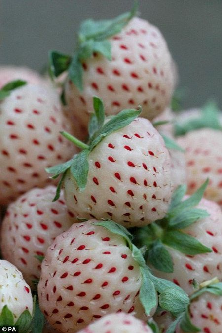 Pineberries.... start off green, gradually turning paler as they ripen.  When the fruit is sweet and juicy enough to eat, the flesh is almost totally white but studded with red seeds - the reverse of the usual variety.
