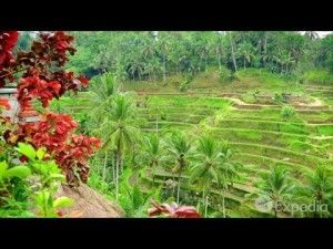 Bali Vacation Travel Guide