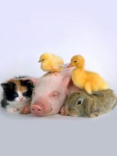 Baby animals----I WANT THEM ALL!!!!
