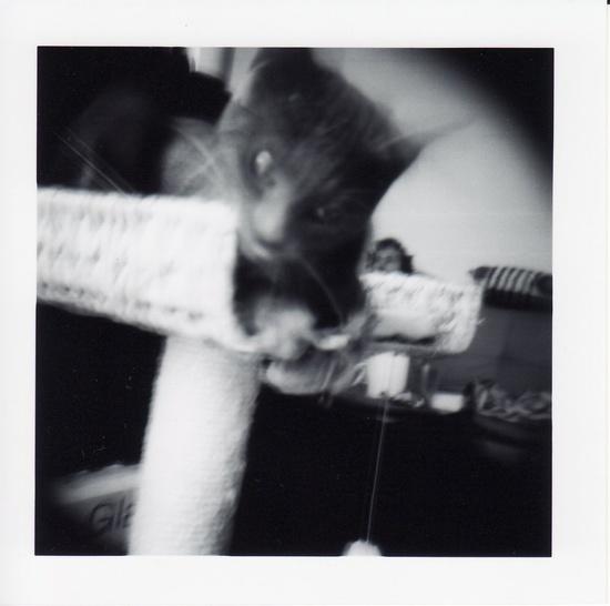 Holga - My baby cat ?