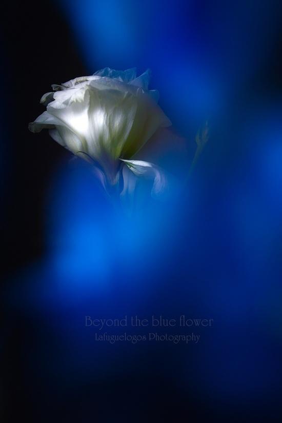 Beyond the blue flower