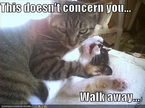 Funny pictures cat