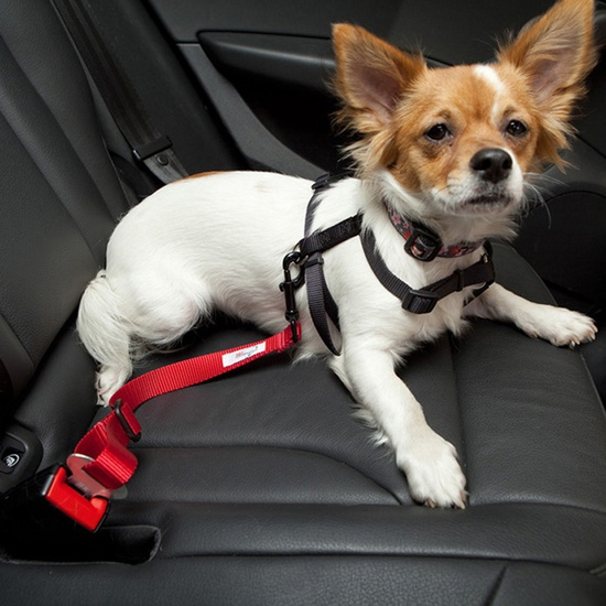 Adjustable Dog Car Seat Belt -  if you slam on the brakes or get into a car accident, he could be seriously injured. It attaches directly to your bud's harness and is designed to work with your vehicle's seatbelt. It's adjustable, allowing you to decide how much movement he'll have and how close you want him to be to the to the car's window. (Variety of colors)