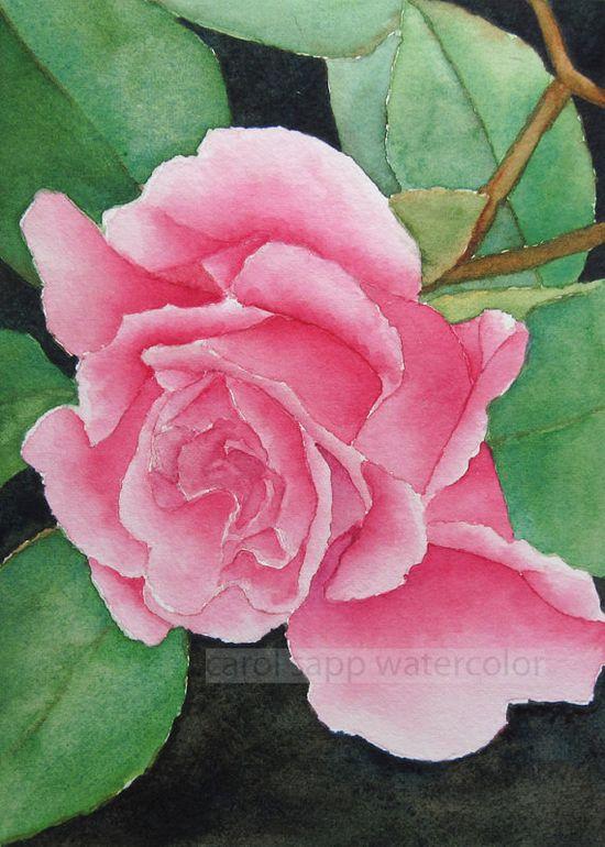 Pink rose watercolor flower painting by Carol Sapp