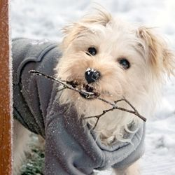 Tips for exercising your dog in chilly weather