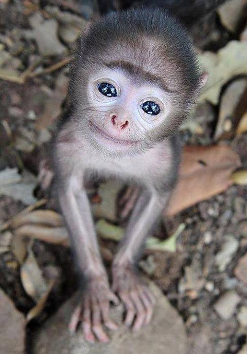 baby monkey ?