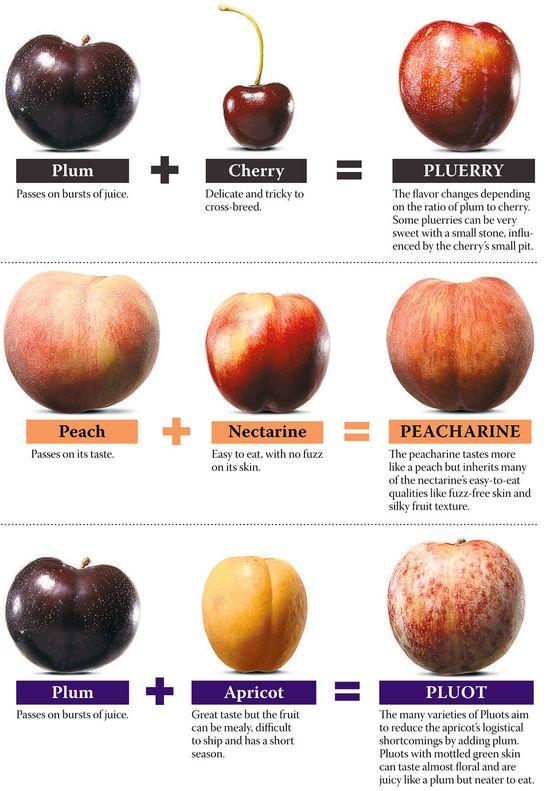 #Hybrid Fruit by Melanie Grayce West, WSJ #Fruit #Hybrid_Fruit #Melanie_Grayce_West