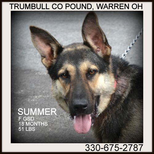 URGENT!!! SHELTER FULL! PLEASE RESCUE/ADOPT ASAP!!!! TRUMBULL COUNTY DOG KENNEL, WARREN, OHIO>>> www.petfinder.com...
