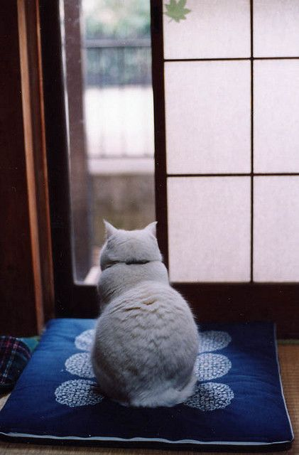 A cat in a Japanese residence, using Japanese floor cushion.