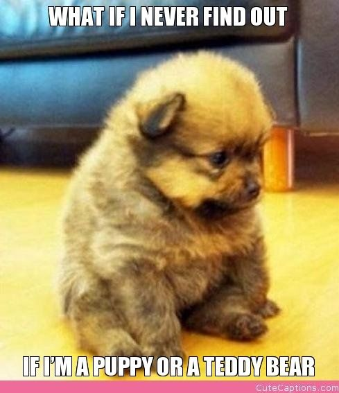 what if I never find out if I'm a puppy or a teddy bear?
