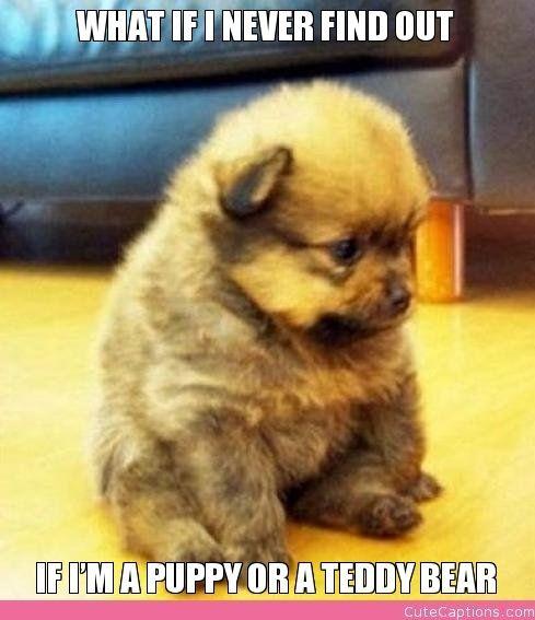 what if I never find out if I'm a puppy or a teddy bear?