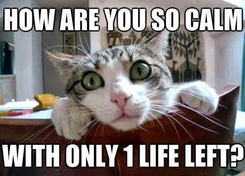 1 life left - Funny Cat
