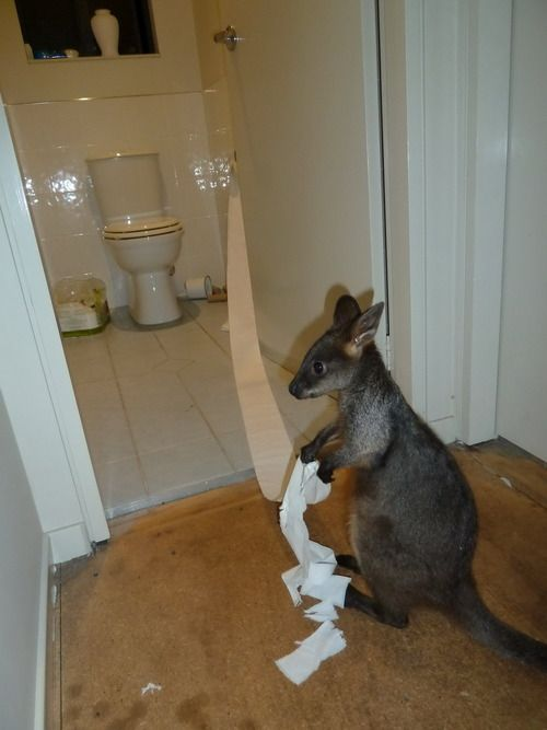 Baby Joey is up to no good